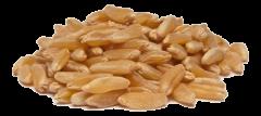 Eko khorasan pšenica - kamut